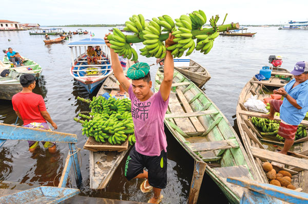 a man hoists a branch with bunches of bananas attached over his head and away from a canoe