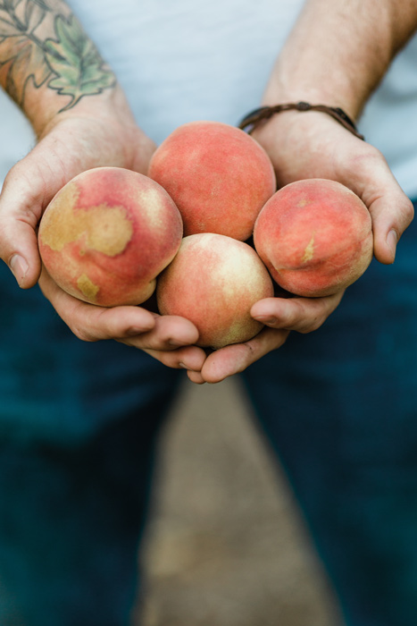 hands holding four imperfect peaches out