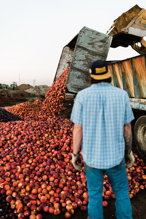 a loader dumps thousands of peaches into a trench while a man stands and watches
