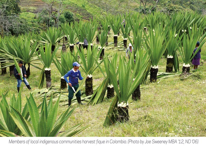 indigenous communities harvest fique in Colombia